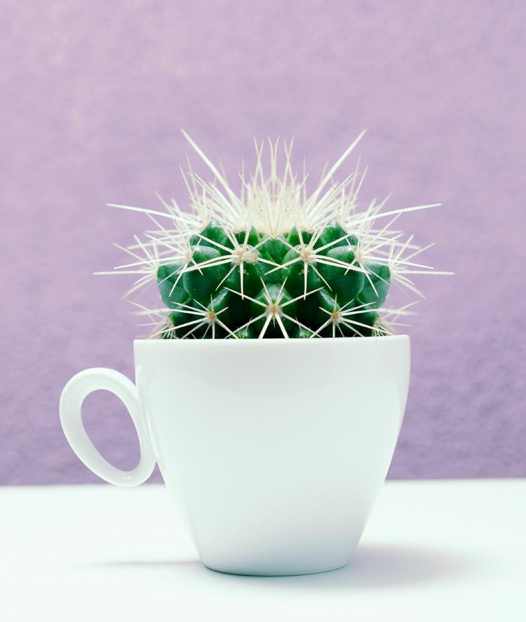 kaktuswasser trinken