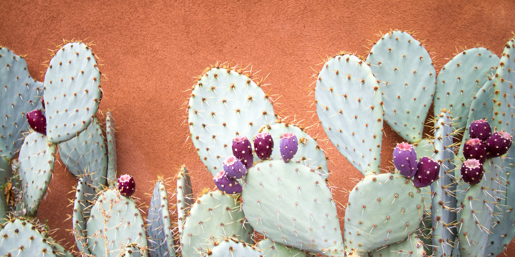 kaktuswasser