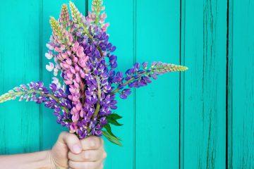 lupinen vegan beautyfood
