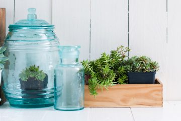 gruenpflanzen deko