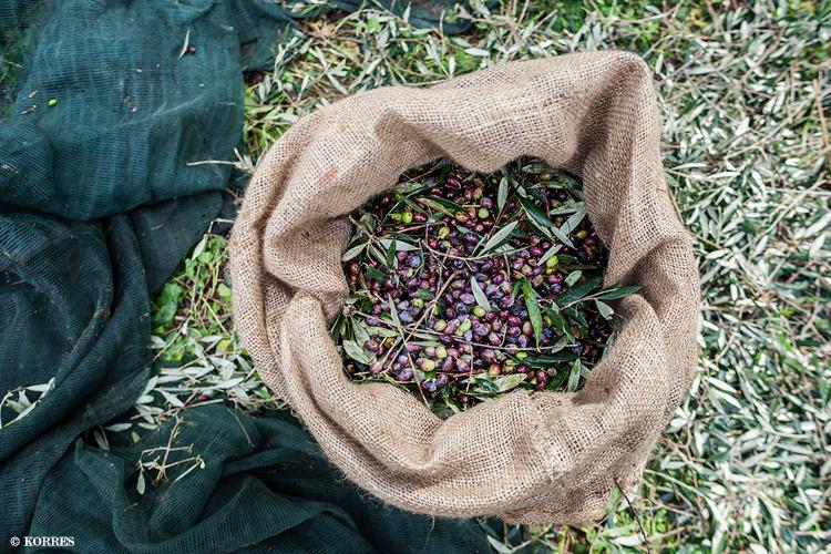 oliven-ernte-korres