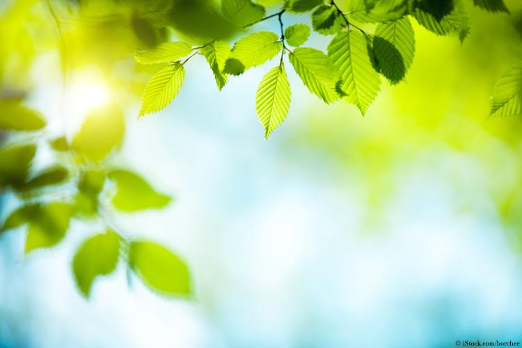 pflanzen-sonnenlicht-photosynthese