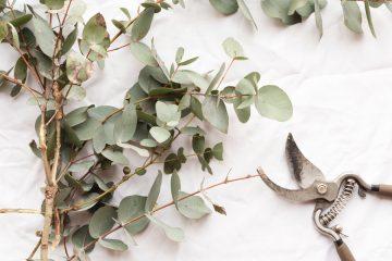 eucalyptus kranz weihnachten