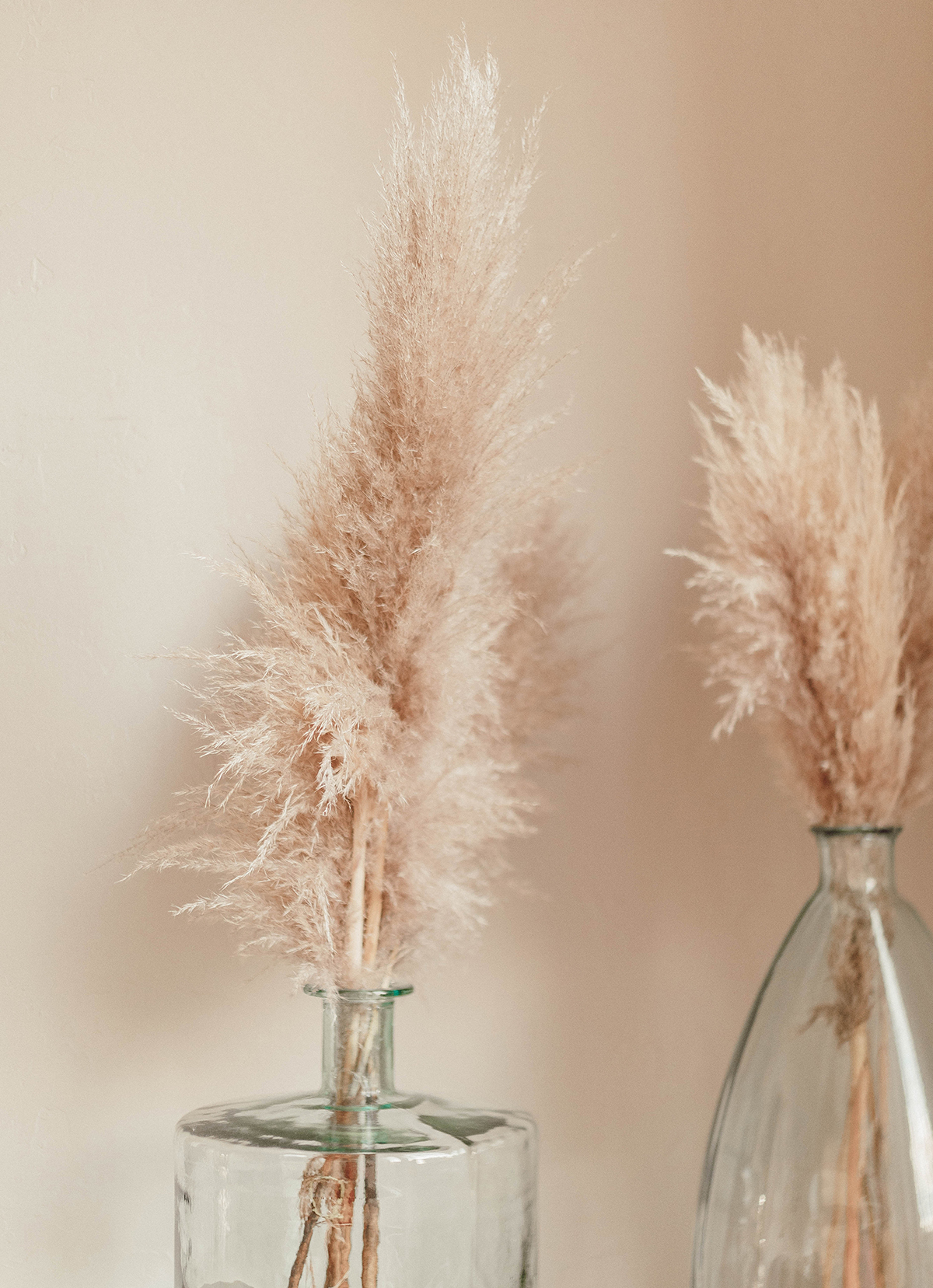 pampasgras interiortrend