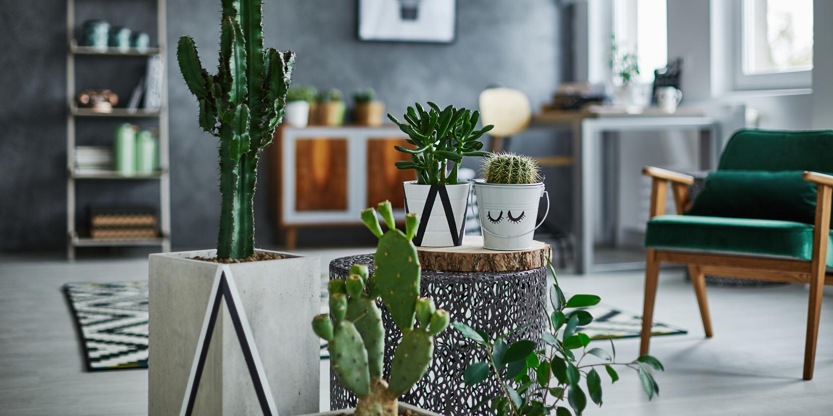Grüner Wohnen Pflegeleichte Pflanzen Für Jedes Zuhause Beautypunk