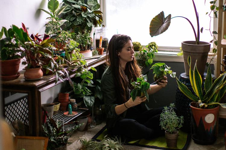 gr ner wohnen pflegeleichte pflanzen f r jedes zuhause. Black Bedroom Furniture Sets. Home Design Ideas