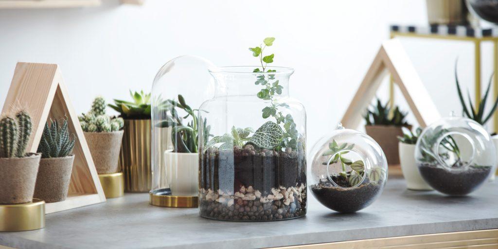 diy mini terrarien sind der neue deko trend beautypunk. Black Bedroom Furniture Sets. Home Design Ideas