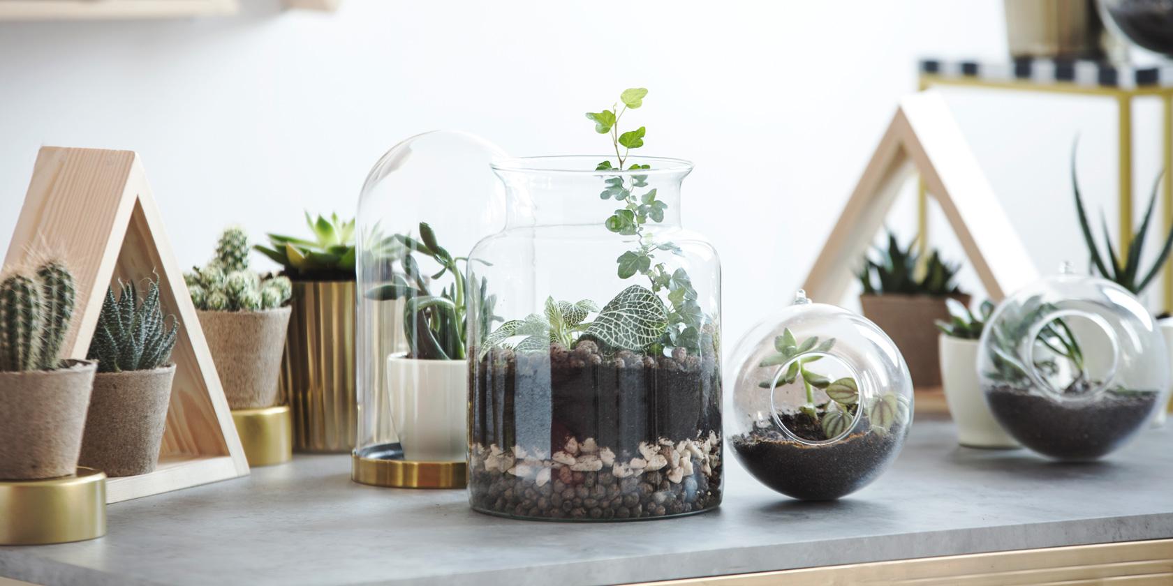 mini terrarium selber bauen pokemon terrarium mysterious meloetta das terrarium fr groe. Black Bedroom Furniture Sets. Home Design Ideas