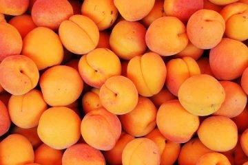 aprikosenkernoel
