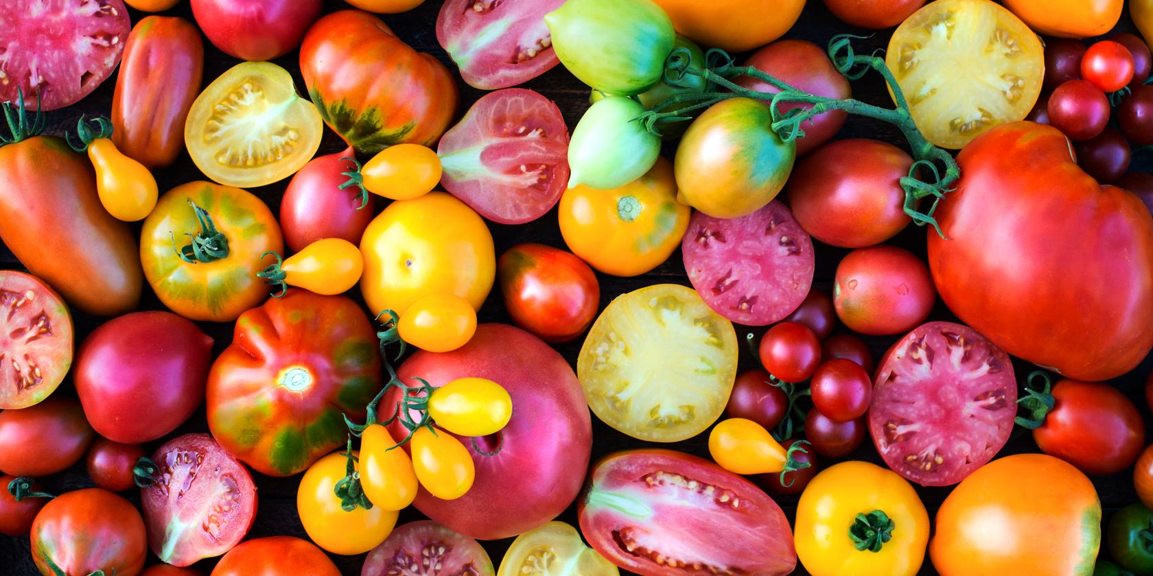 verschiedene sorten tomaten