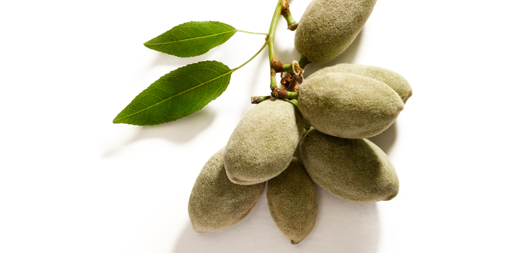 gruene mandeln