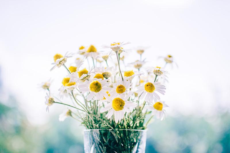 kamillenblüten in einer vase