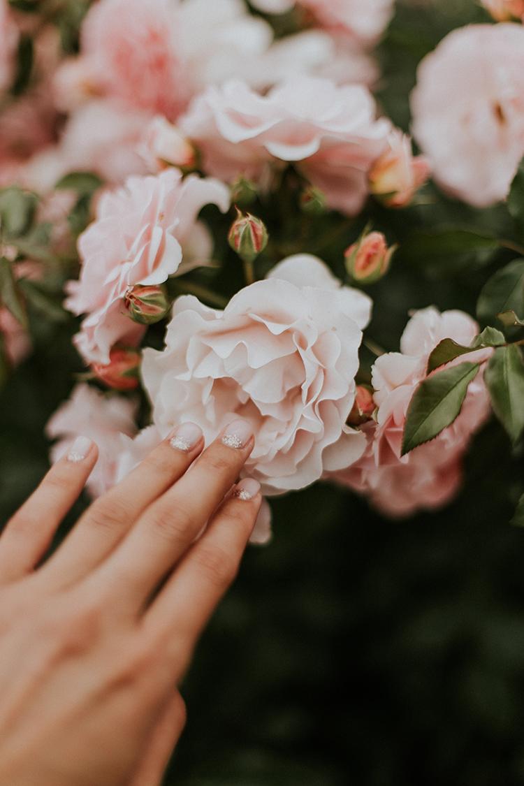 Manikürte Hand berührt Rose