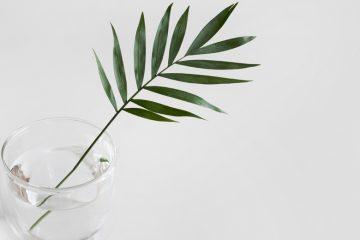 eine pflanze in einem glas wasser