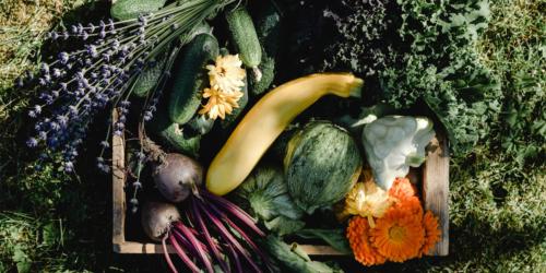 garten pflanzen obst gemuese